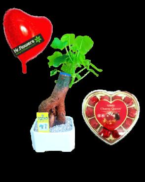 דיל עץ אהבה