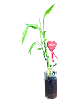 לקי במבוק 3 עץ מזל